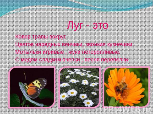 Луг - это Ковер травы вокруг. Цветов нарядных венчики, звонкие кузнечики. Мотыльки игривые , жуки неторопливые. С медом сладким пчелки , песня перепелки.