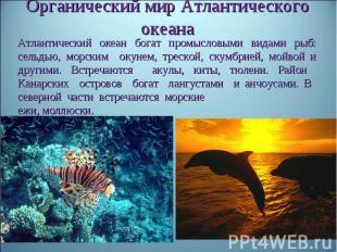 Органический мир Атлантического океанаАтлантический океан богат промысловыми вид