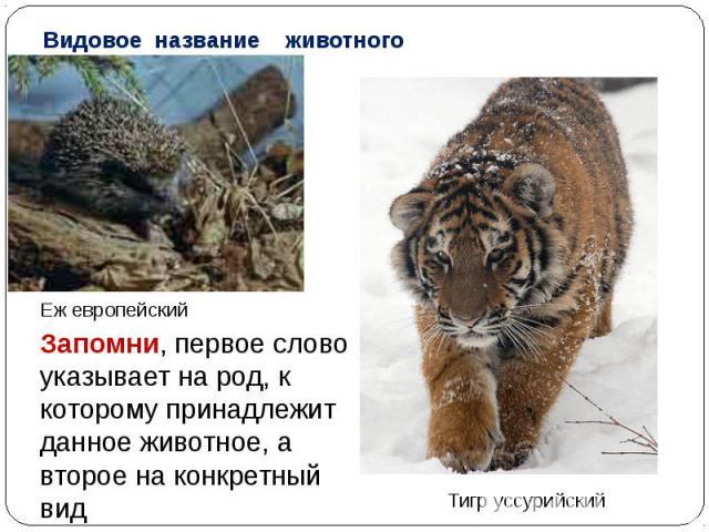 Видовое название животногоЕж европейскийЗапомни, первое слово указывает на род, к которому принадлежит данное животное, а второе на конкретный вид