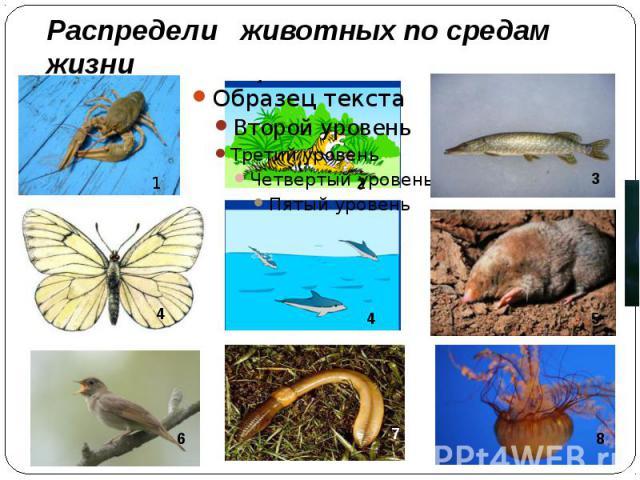 Распредели животных по средам жизни