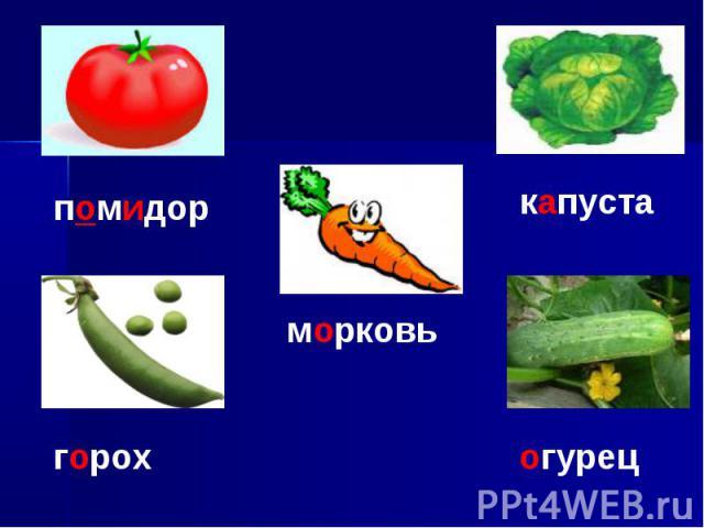 помидорморковькапуста