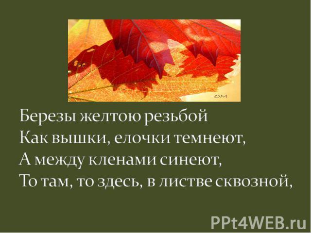 Березы желтою резьбойКак вышки, елочки темнеют,А между кленами синеют,То там, то здесь, в листве сквозной,
