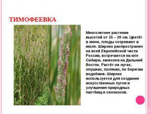 Многолетнее растение высотой от 15 – 20 см. Цветёт в июне, плоды созревают в июл