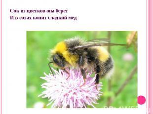 Сок из цветков она беретИ в сотах копит сладкий мед