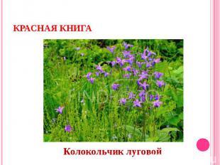 Красная книгаКолокольчик луговой