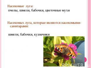 Насекомые луга: пчелы, шмели, бабочки, цветочные мухиНасекомых луга, которые явл