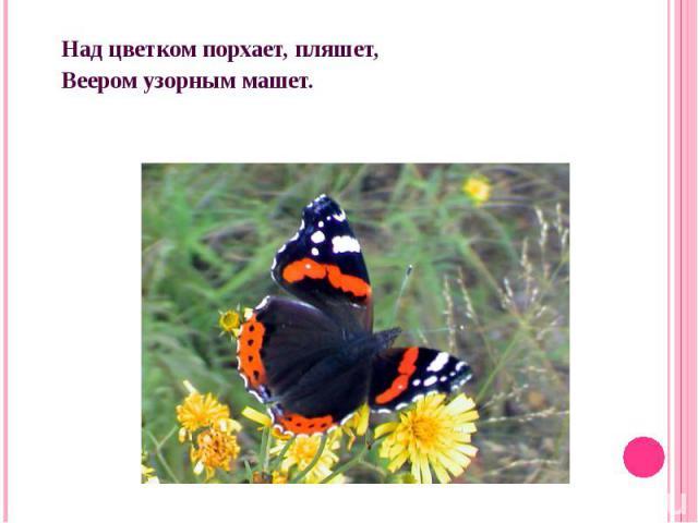 Над цветком порхает, пляшет,Веером узорным машет.