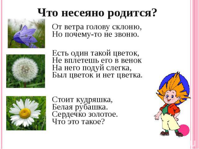 Что несеяно родится?От ветра голову склоню,Но почему-то не звоню.Есть один такой цветок,Не вплетешь его в венокНа него подуй слегка,Был цветок и нет цветка. Стоит кудряшка,Белая рубашка.Сердечко золотое.Что это такое?