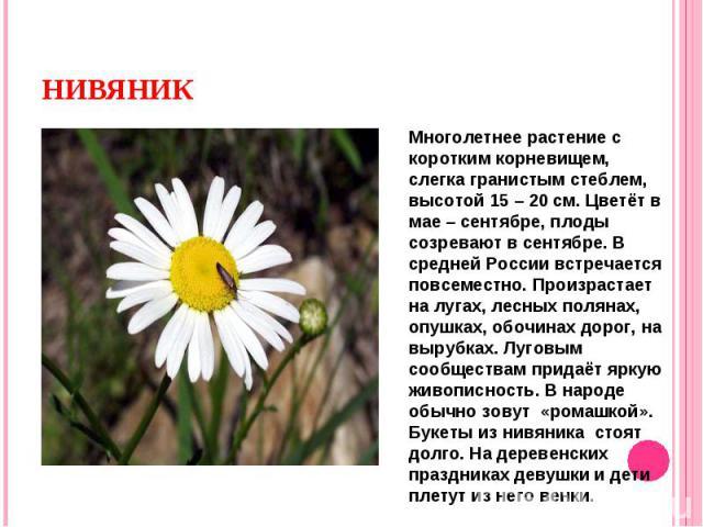 Многолетнее растение с коротким корневищем, слегка гранистым стеблем, высотой 15 – 20 см. Цветёт в мае – сентябре, плоды созревают в сентябре. В средней России встречается повсеместно. Произрастает на лугах, лесных полянах, опушках, обочинах дорог, …