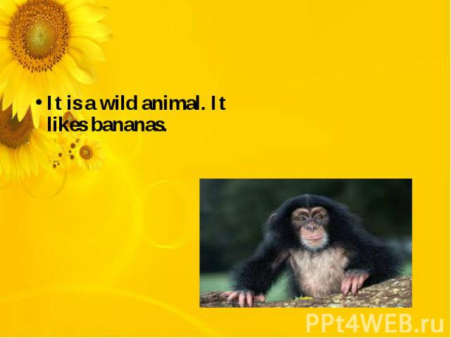 It is a wild animal. It likes bananas.
