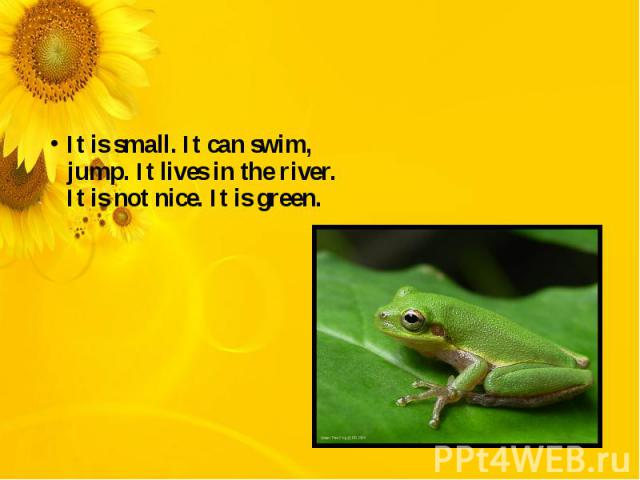 It is small. It can swim, jump. It lives in the river. It is not nice. It is green.