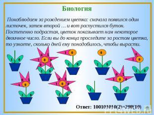 Понаблюдаем за рождением цветка: сначала появился один листочек, затем второй …