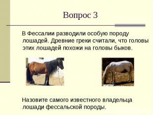 Вопрос 3 В Фессалии разводили особую породу лошадей. Древние греки считали, что