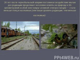 28 лет после чернобыльской аварии постоянное воздействие малых доз радиации прод