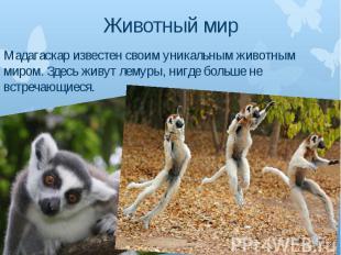 Животный мир Мадагаскар известен своим уникальным животным миром. Здесь живут ле