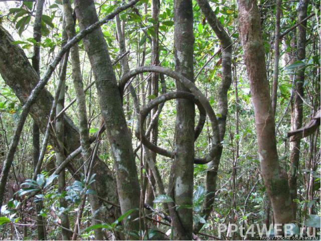 Растительный мир Пахотные земли занимают 4% территории, луга и пастбища - 58%, леса и кустарники -26%. Леса на острове сохранились преимущественно в труднодоступных местах. Там растут палисандровое, черное эбеновое, другие деревья с ценной древесино…