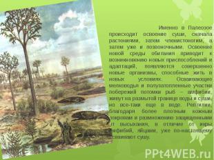Именно в Палеозое происходит освоение суши, сначала растениями, затем членистоно