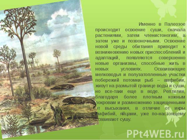 Именно в Палеозое происходит освоение суши, сначала растениями, затем членистоногим, а затем уже и позвоночными. Освоение новой среды обитания приводит к возникновению новых приспособлений и адаптаций, появляются совершенно новые организмы, способны…
