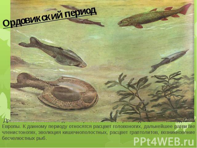 Ордовикский период Древнейшие, описанные до сих пор позвоночные, происходят из нижнего ордовика Европы. К данному периоду относятся расцвет головоногих, дальнейшее развитие членистоногих,эволюция кишечнополостных, расцвет граптолитов, возникновение…