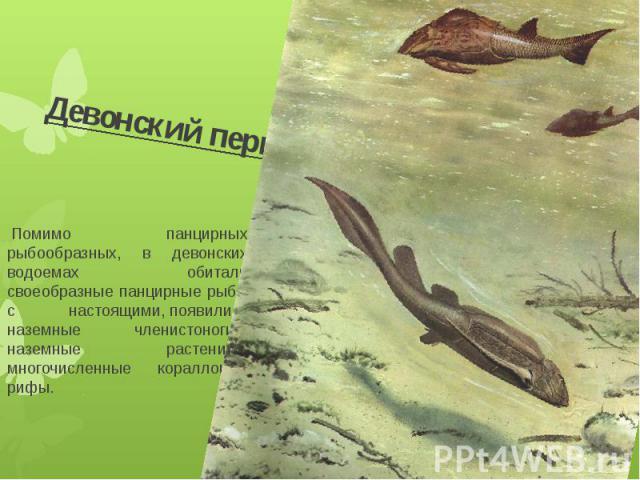 Девонский период Помимо панцирных рыбообразных, в девонских водоемах обитали своеобразные панцирные рыбы с настоящими,появились наземные членистоногие, наземные растенияи многочисленные коралловые рифы.