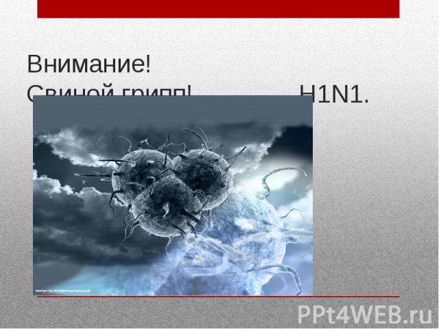 Внимание! Свиной грипп! Н1N1.