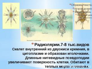 Радиолярии.7-8 тыс.видов Скелет внутренний из двуокиси кремния, в цитоплазме и о
