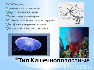 Тип Кишечнополостные 9 000 видов. Низшие многоклеточные. Двухслойное строение. Р