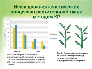 Исследования кинетических процессов растительной ткани методом КР Рис.6 – Схемат