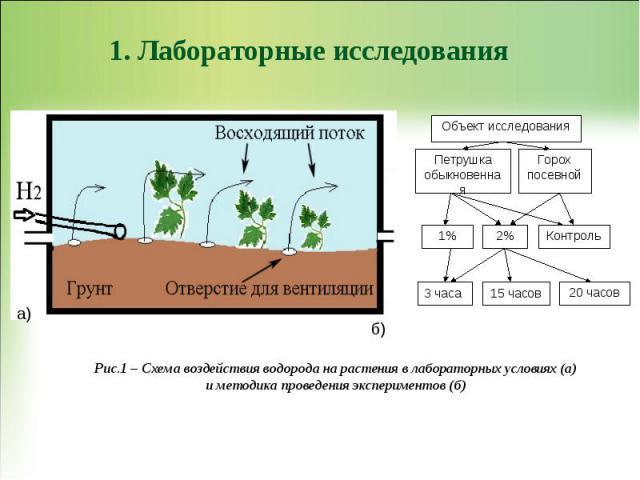 1. Лабораторные исследования Рис.1 – Схема воздействия водорода на растения в лабораторных условиях (а) и методика проведения экспериментов (б)