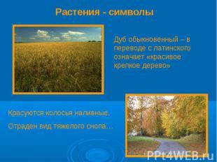 Растения - символы Дуб обыкновенный – в переводе с латинского означает «красивое