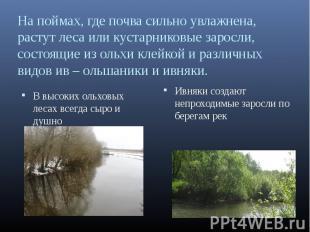 На поймах, где почва сильно увлажнена, растут леса или кустарниковые заросли, со