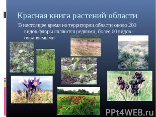 Красная книга растений областиВ настоящее время на территории области около 200