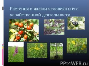 Растения в жизни человека и его хозяйственной деятельности