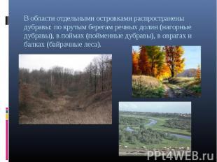 В области отдельными островками распространены дубравы: по крутым берегам речных
