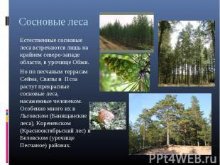 Сосновые леса Естественные сосновые леса встречаются лишь на крайнем северо-запа