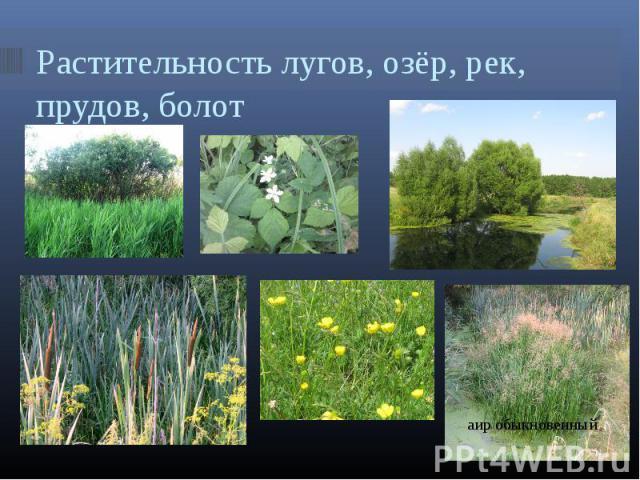 Растительность лугов, озёр, рек, прудов, болот