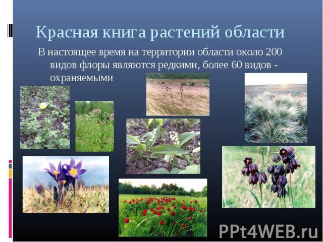 Красная книга растений областиВ настоящее время на территории области около 200 видов флоры являются редкими, более 60 видов - охраняемыми