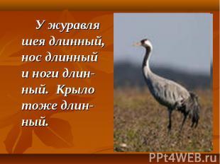 У журавля шея длинный, нос длинный и ноги длин-ный. Крыло тоже длин-ный.