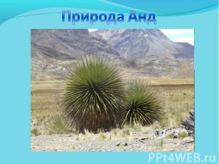Природа Анд