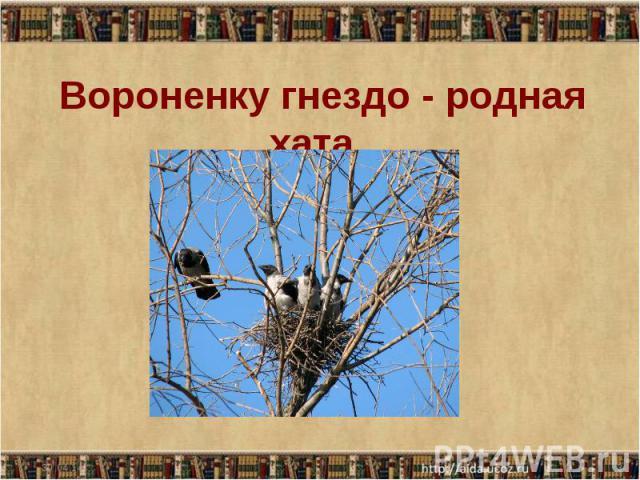 Вороненку гнездо - родная хата.