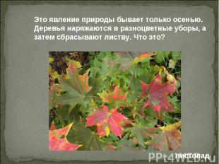 Это явление природы бывает только осенью. Деревья наряжаются в разноцветные убор