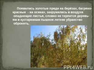 Появились золотые пряди на берёзах, багряно- красные - на осинах, закружились в