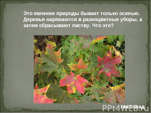 Это явление природы бывает только осенью. Деревья наряжаются в разноцветные уборы, а затем сбрасывают листву. Что это?