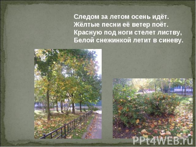 Следом за летом осень идёт. Жёлтые песни её ветер поёт. Красную под ноги стелет листву, Белой снежинкой летит в синеву.
