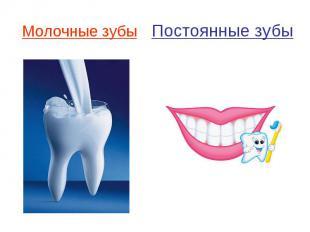 Молочные зубы Постоянные зубы