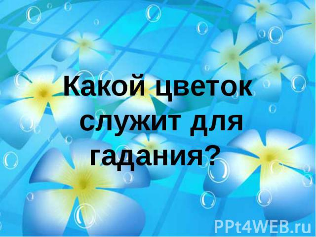 Какой цветок служит для гадания?