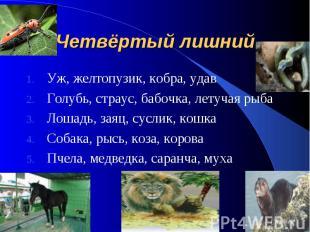 Четвёртый лишний Уж, желтопузик, кобра, удав Голубь, страус, бабочка, летучая ры