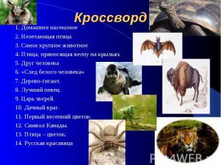 Кроссворд 1. Домашнее насекомое 2. Нелетающая птица 3. Самое крупное животное 4.
