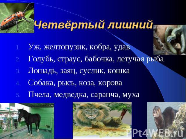 Четвёртый лишний Уж, желтопузик, кобра, удав Голубь, страус, бабочка, летучая рыба Лошадь, заяц, суслик, кошка Собака, рысь, коза, корова Пчела, медведка, саранча, муха