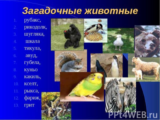 Загадочные животные рубакс, рикодолк, шугляка, шкала тикула, авуд, губела, куньо какиль, кселт, рыкса, фариж, грит